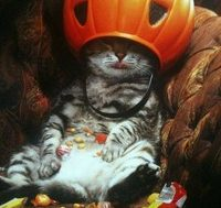 catnip_and_halloween_candy_is_a_helluva_mix_200