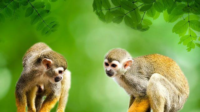 monkey-314690_640