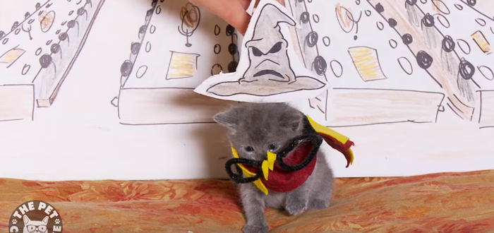Harry Potter Reenacted By Kittens