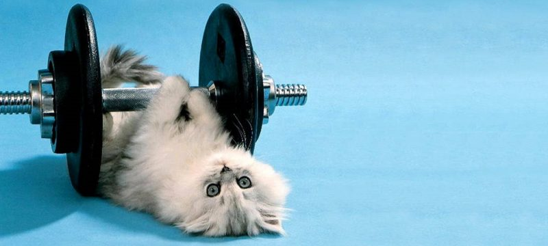 Cat-workout-2
