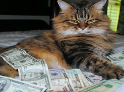 rsz_o-cash-cat-facebook