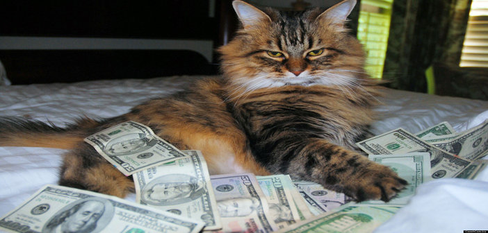 rsz_o-cash-cat-facebook