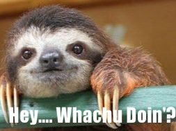 hey-whatcha-doin