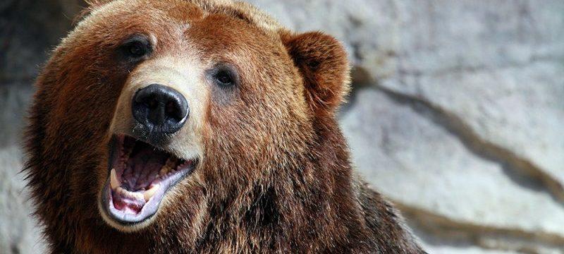 smiling_bear