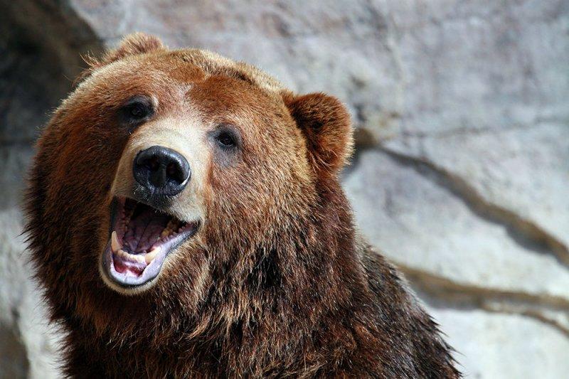Remember The Kayak Bear? – Viral Video