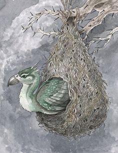 Augurey in its tear-shaped nest